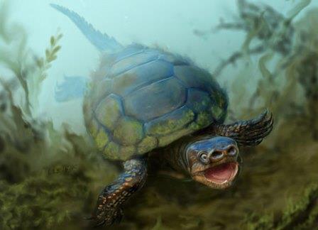 В Юте раскопали черепаху с мордой поросенка