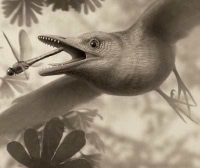 Так художник представил себе древнюю птицу из числа энанциорнисов, к числу которых принадлежит птеригорнис