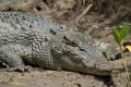 Зоологи выяснили, что крокодилы спят с открытым глазом