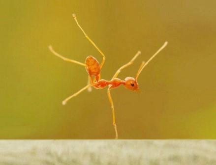 Четверть рабочих особей в муравейнике — большие специалисты по безделью
