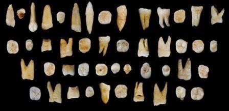 Зубы кроманьонцев, найденные в пещере Фунянь