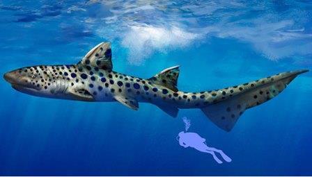 Каменноугольная акула Goodrichthys, увеличенная до размеров техасской суперакулы