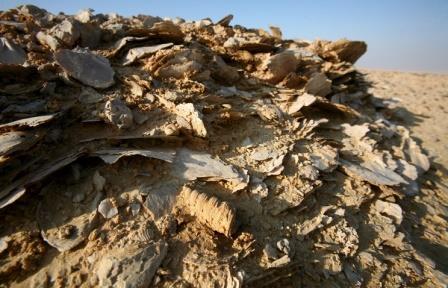 Первое вымирание живых организмов на Земле произошло на 100 млн лет раньше, чем считалось