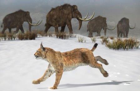 Пиренейская рысь в ледниковую эпоху