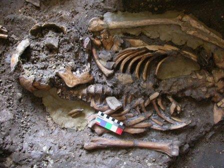 Скелет человека из пещеры в Грузии
