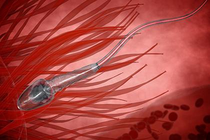 Ученые объяснили быстроту движения сперматозоидов