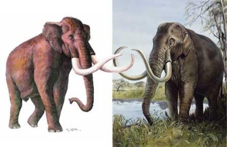 Слева южный слон (реконструкция A.Vlachos, G.Lyras), справа колумбийский мамонт (реконструкция Michael Long)