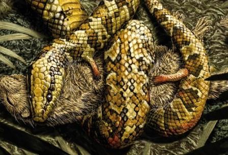 Змея и ее жертва
