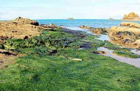 Наземные растения произошли от водорослей на суше