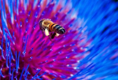 Волосяной покров насекомых может сгибаться и распрямляться, помогая им «умываться» в ходе водных процедур