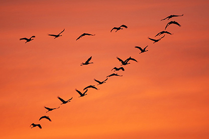 Орнитологи нашли родину птиц
