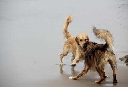 Классические тесты с зеркалом не дают для собак однозначного результата