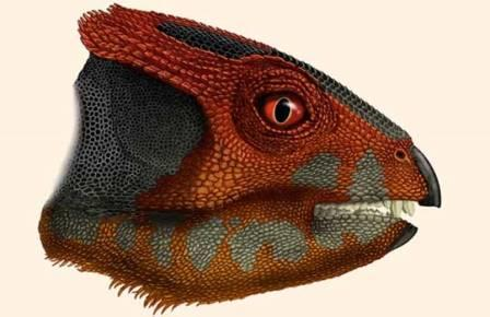Голова Hualianceratops wucaiwanensis