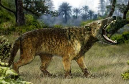 Типовой род гиенодонтид Hyaenodon