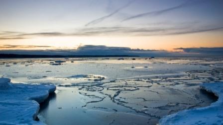 Ученые нашли около 500 новых морских организмов на дне Охотского моря