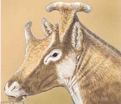 Xenokeryx amidalae