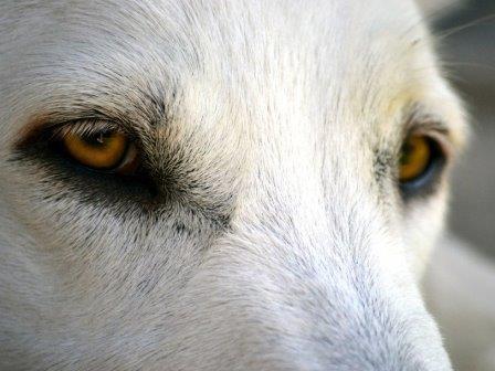 Нейрохимия собак и людей имеет интересное сходство