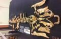 Найдена прародина утконосых динозавров