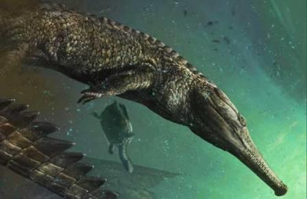 Machimosaurus rex