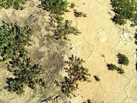"""Темные почвы пустынь оказались гигантскими """"теплицами"""", созданными бактериями"""