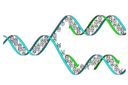 Российские биологи выяснили, как появляются приводящие к раку мутации