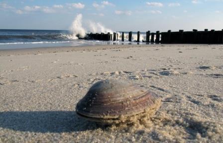 Моллюски возглавили перечень существ-долгожителей по версии журнала Time