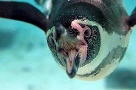 Пингвин в зоопарке Лондона