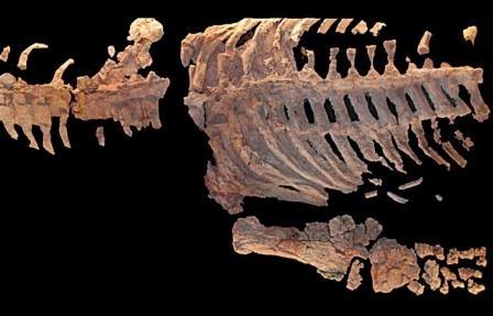 В России обнаружен новый вид плезиозавра, жившего более 65 млн лет назад