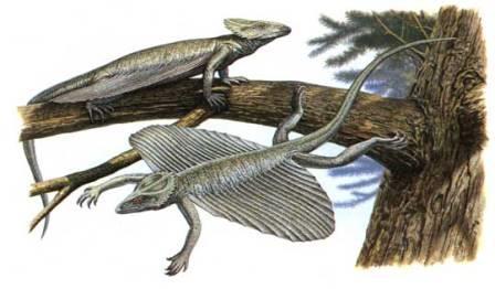 Coelurosauravus – яркий представитель вейгельтизаврид