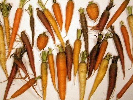 Морковь - источник антиоксиданта бета-каротина