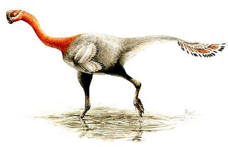Apatoraptor pennatus