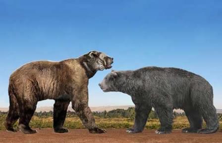 Arctodus (слева) и Arctotherium (справа)