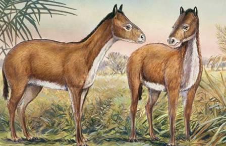 Древняя лошадь Mesohippus величиной с собаку