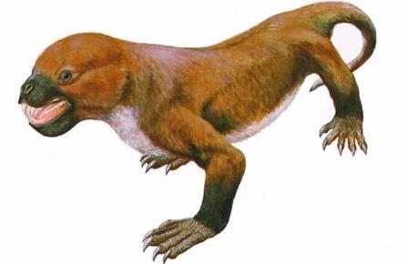 Montirictus kuwajimaensis