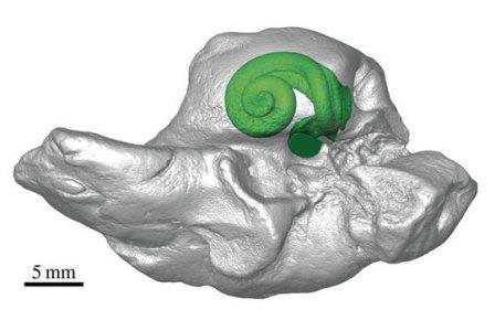 Киты овладели ультразвуком на заре своей эволюции