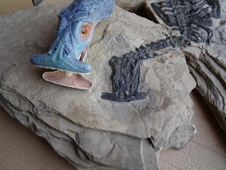 Реконструкция головы Atopodentatus
