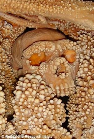 Череп человека из Альтамуры