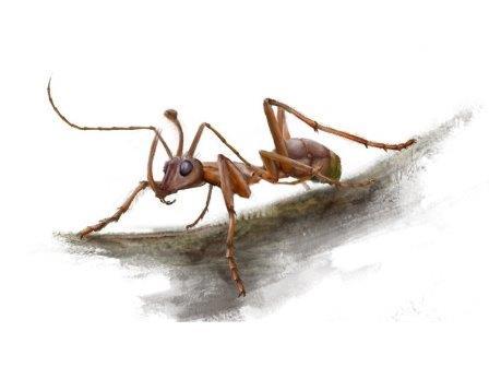 В янтаре найден «муравей-единорог»