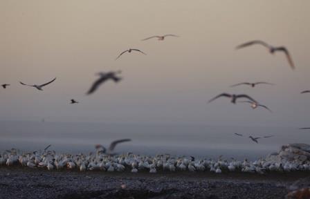 Зоологи выяснили, что ранняя весна в Арктике вызывает гибель птиц в Африке