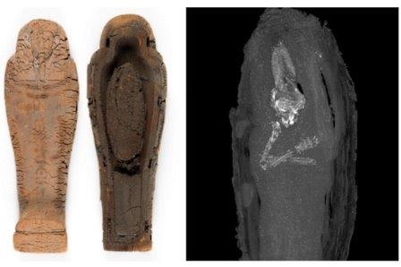 В миниатюрном египетском саркофаге обнаружен эмбрион