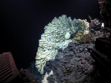 Найдена самая большая морская губка