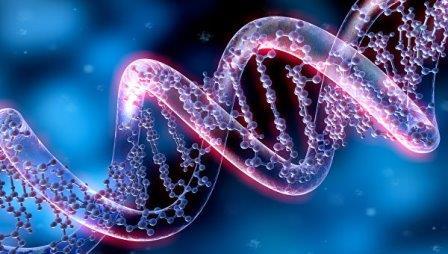 Нить ДНК