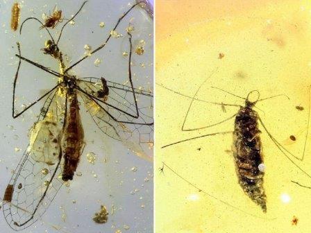Личинки древнего насекомого охотились на пауков