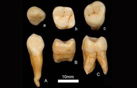 Зубы, найденные экспедицией Чжао Линся