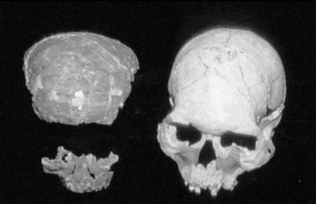 «Глубокий череп» с Борнео переписал историю заселения Азии