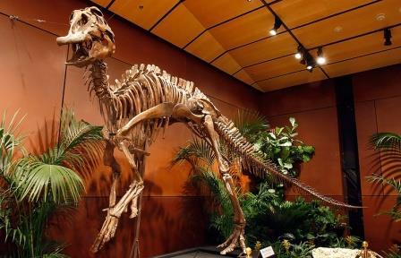Китайские ученые извлекли из-под земли практически полный скелет гадрозавра