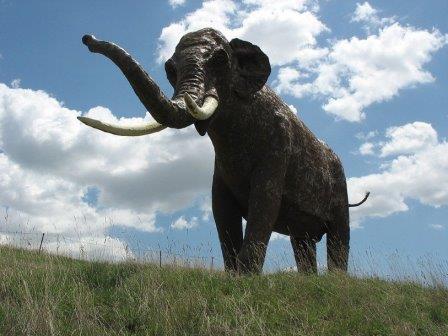 Прямобивневый слон, реконструкция