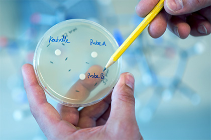 Бактерии © Sebastian Gollnow / DPA / Globallookpress.com