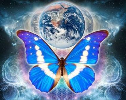 Значение бабочки