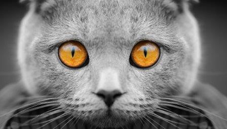"""Ученые выяснили, как паразит кошек """"зомбирует"""" их владельцев"""